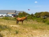 Assateague48