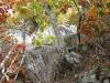 bash_bish_autumn50