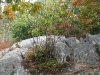 bash_bish_autumn51