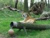 bronx_zoo28