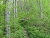 catskills_hike_wreck013