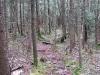 catskills_hike_wreck065