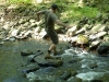 delaware_water_gap031