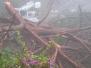 Laurel Canyon Storm